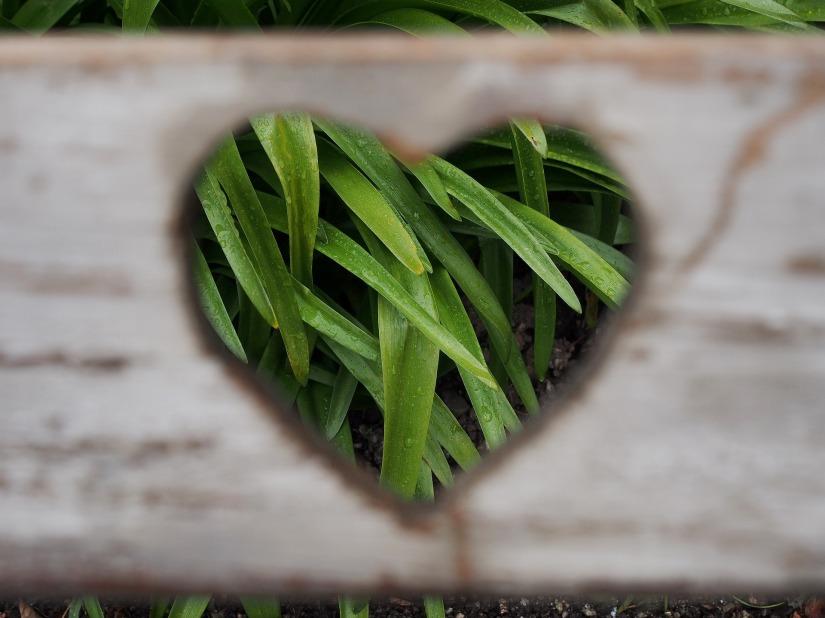 love-1333508_1920.jpg